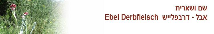 שם ושארית | אבל דרבפלייש | Ebbel Derbfleish